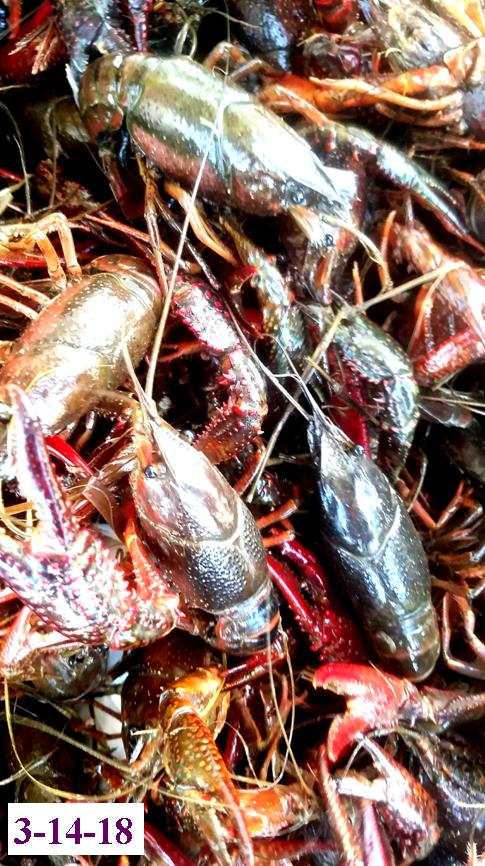 crawfish and seafood shipped to door  airport
